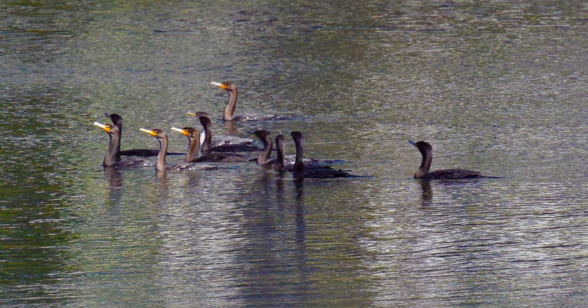 Bird Migration - Allison Richter Wildlife Studio