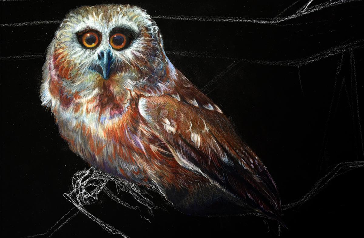 Saw Whet Owl Artwork Progress - Allison Richter