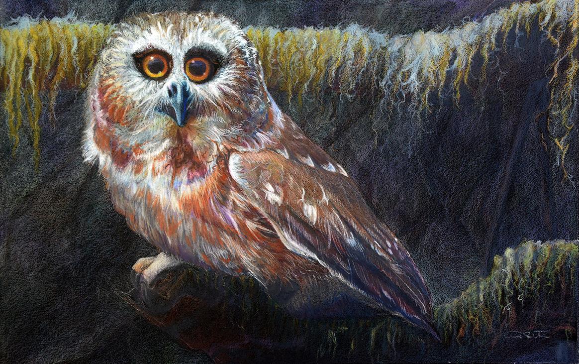 Original Owl Artwork - Saw-whet Owl