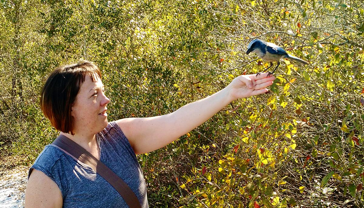Allison Richter Wildlife Artist with Scrub Jay