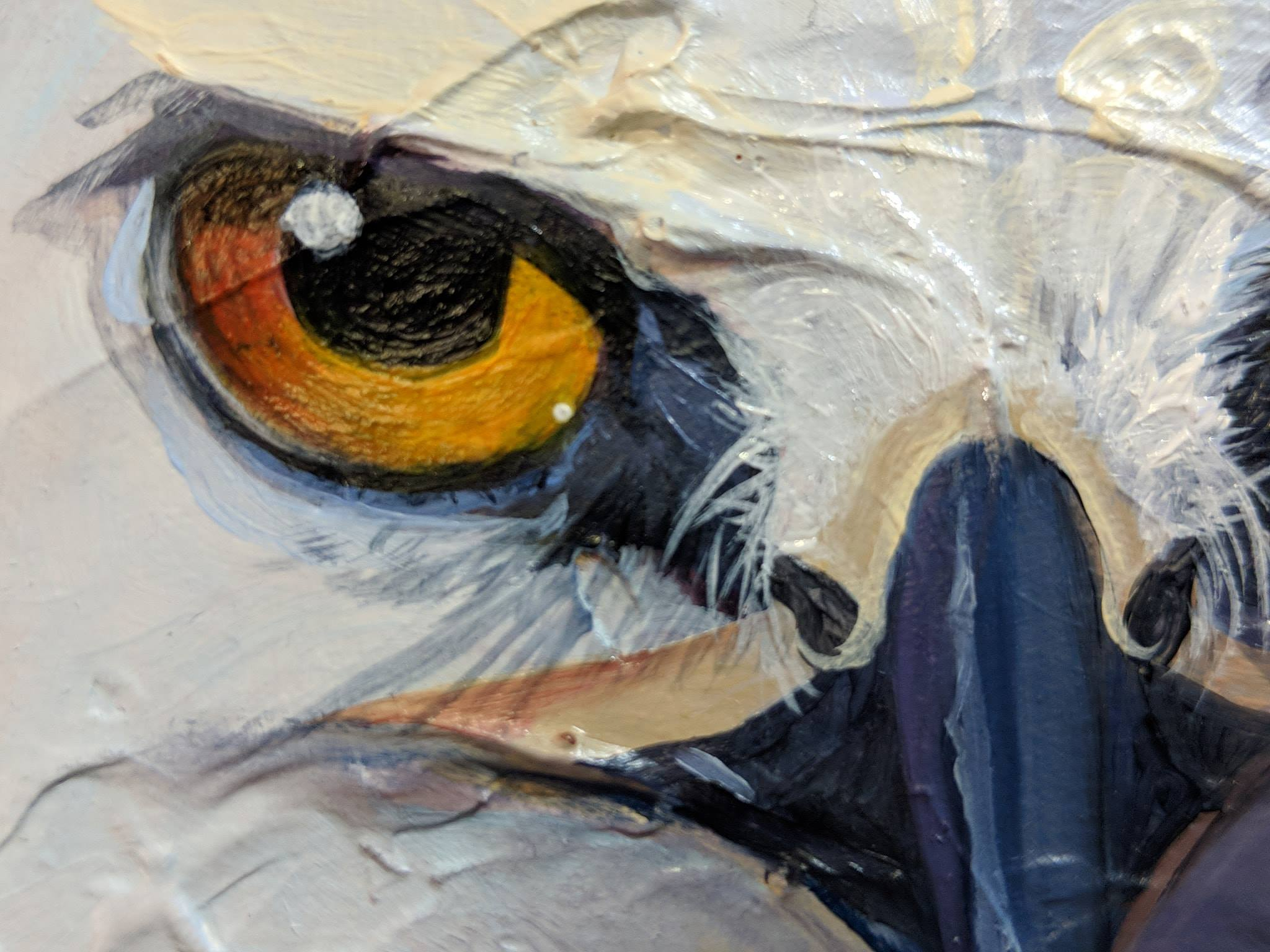 White-tail Kite Oil Painting in Progress - beginning of face details on the bird art