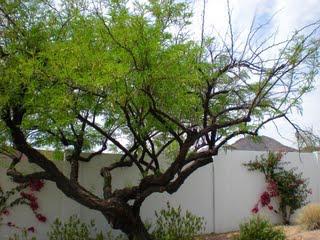 mesquite construction damage