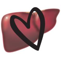 Liver Reboot instead of liver detox