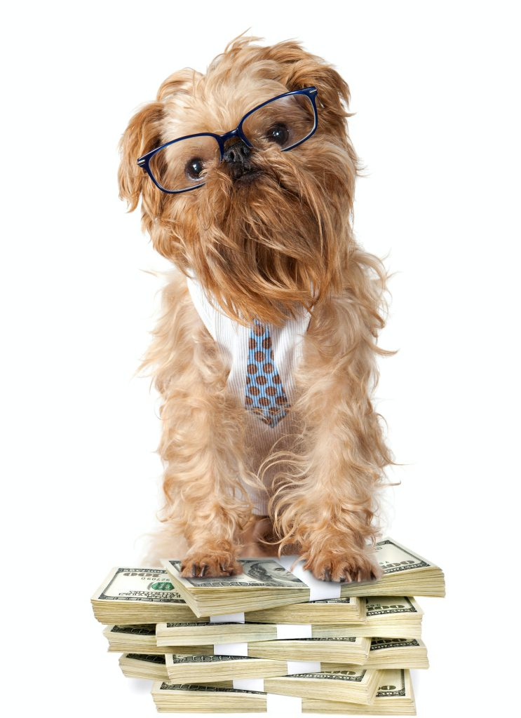 Dog with glasses guards a pile of cash