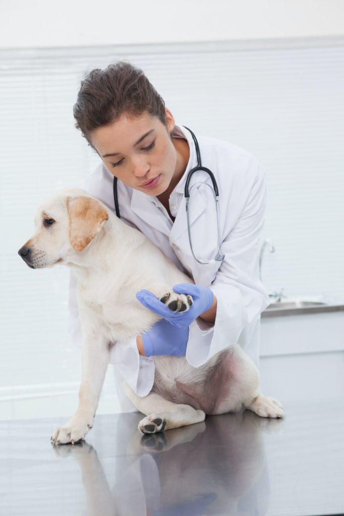 Veterinarian examining a cute dog in medical office
