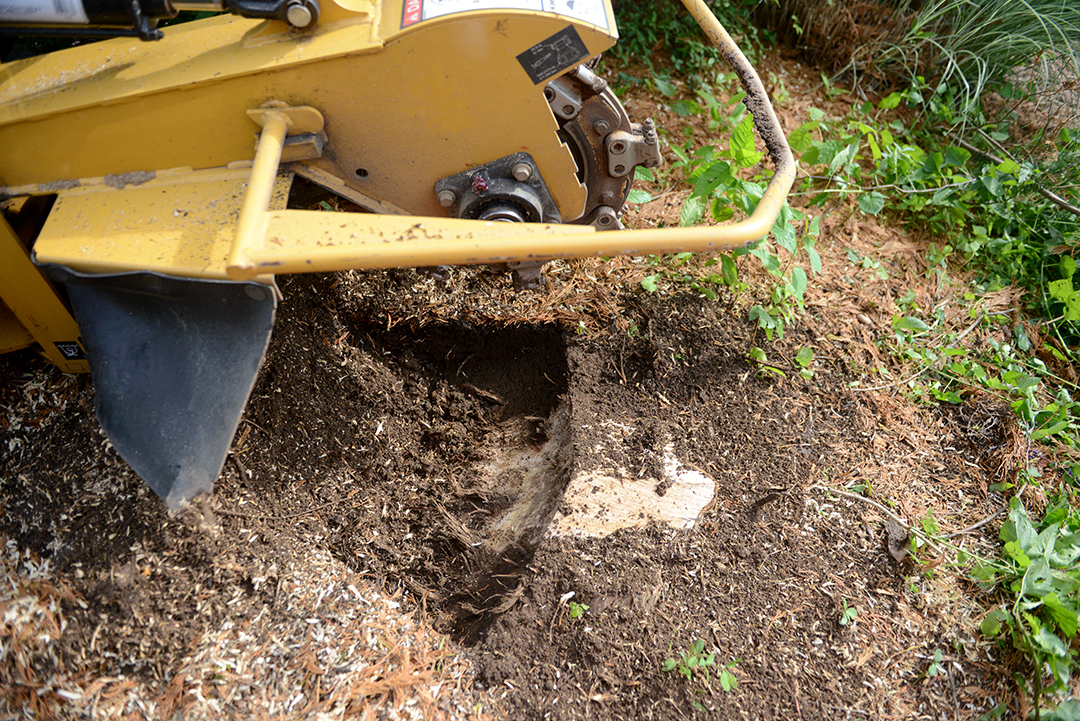 Move the wheel of the stump grinder from side to side across the stump.