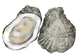 oysters-1