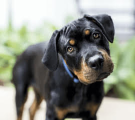 Cute dog staring