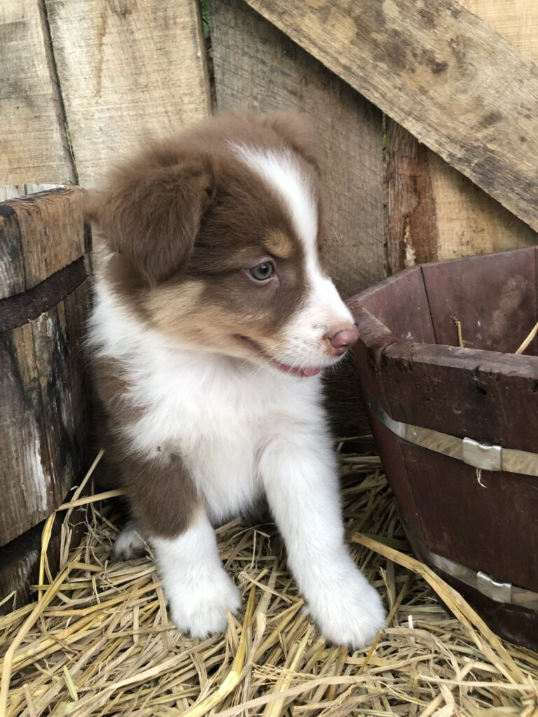 Whiskey's Litter April 2019