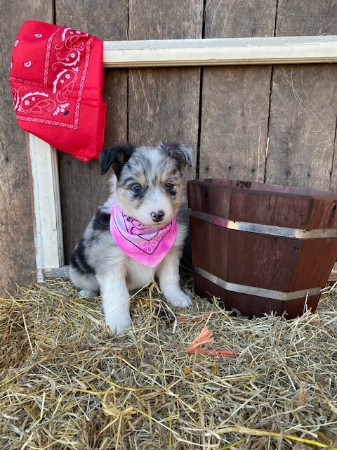 Whiskey's Litter October 2019