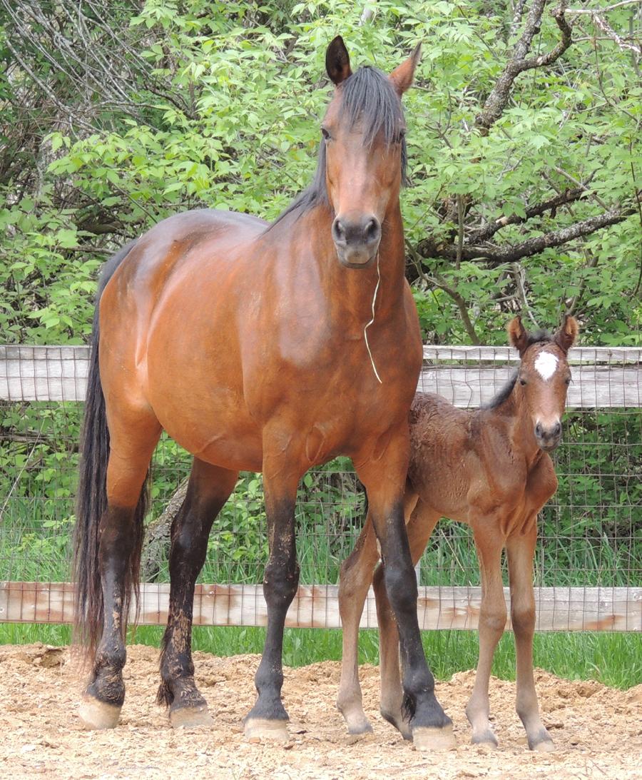 Mare with newborn foal