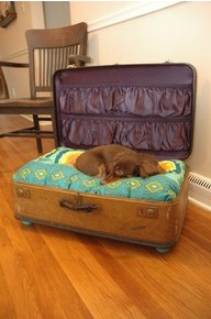 Design-Friendly ideas for pet beds 3