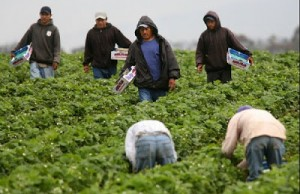 02 mexican workers