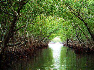 Everglades - pollution