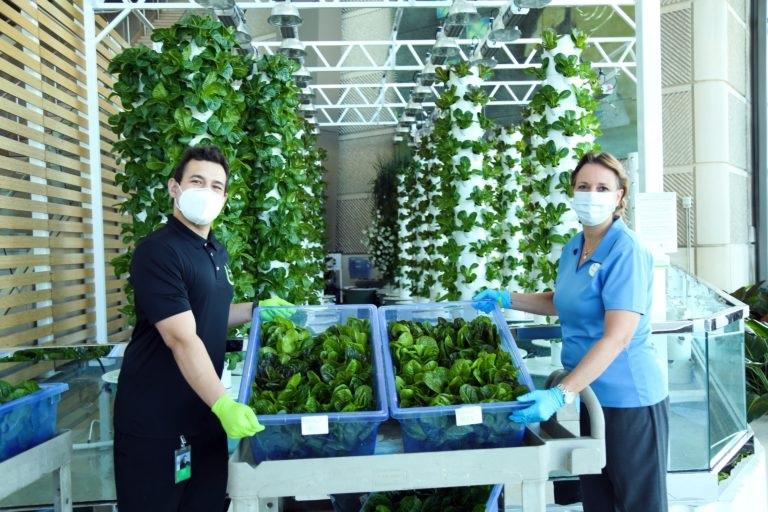Convention Center Gardens Help Feed Region
