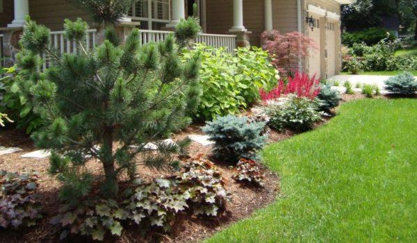 Landscape Planting