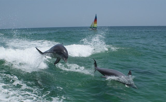 dolphins-1069473_1280-1280x792