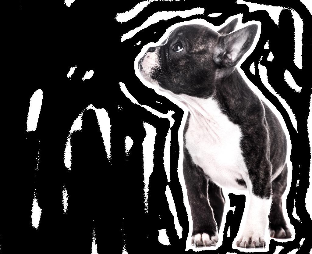 dog - mobile vet