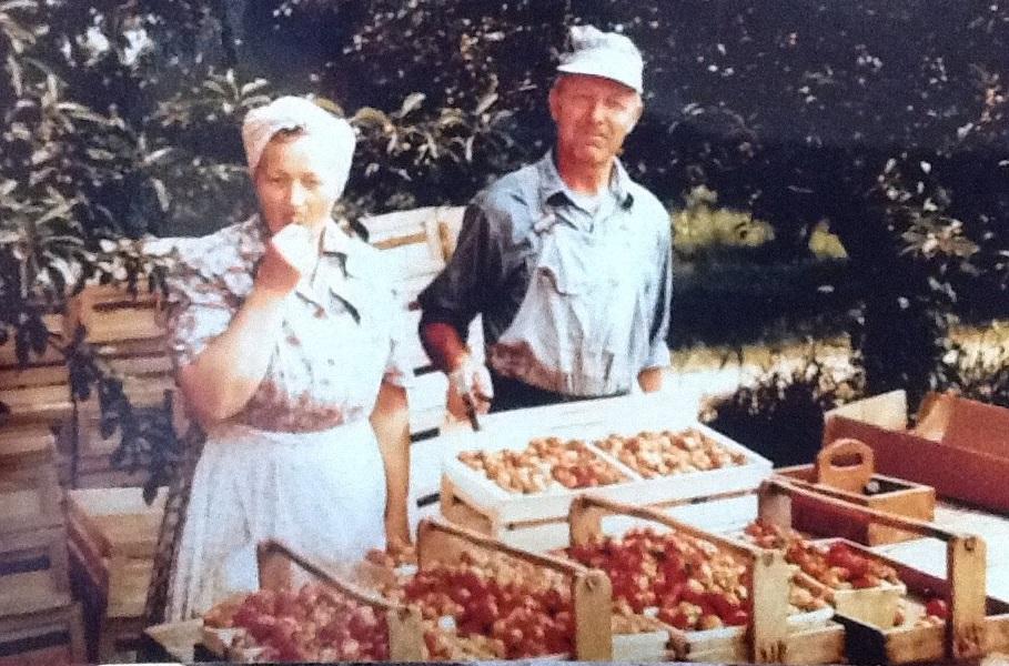 berrien county fruit farm