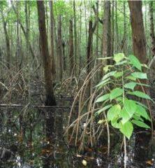 Delineacion de Humeda/Wetland Delineation