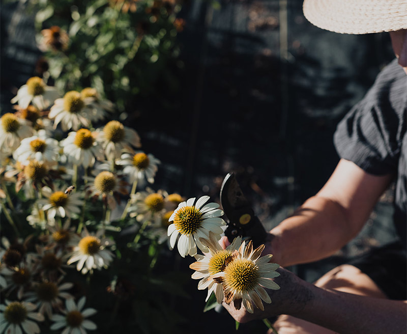 Lisa cuts flowers.