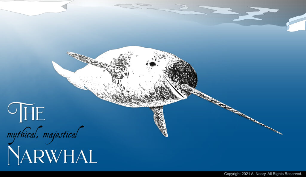 magical majestical narwhal, unicorn of the sea