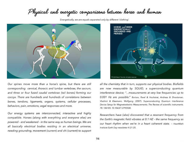 Illustrations and description comparing the horse and human skeletons and energetic anatomy