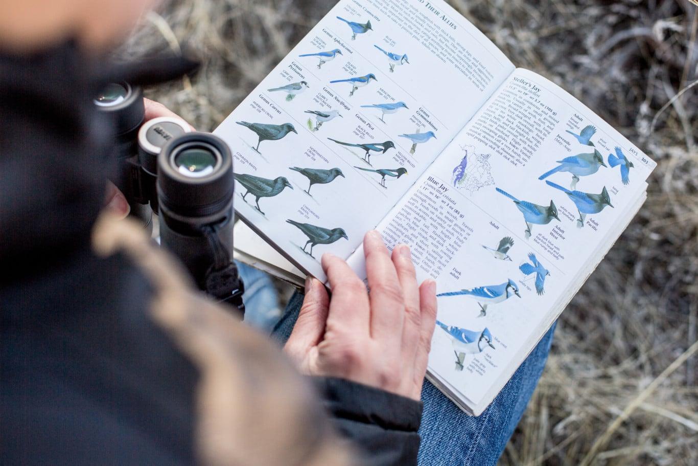 Bird-watching in Wyoming