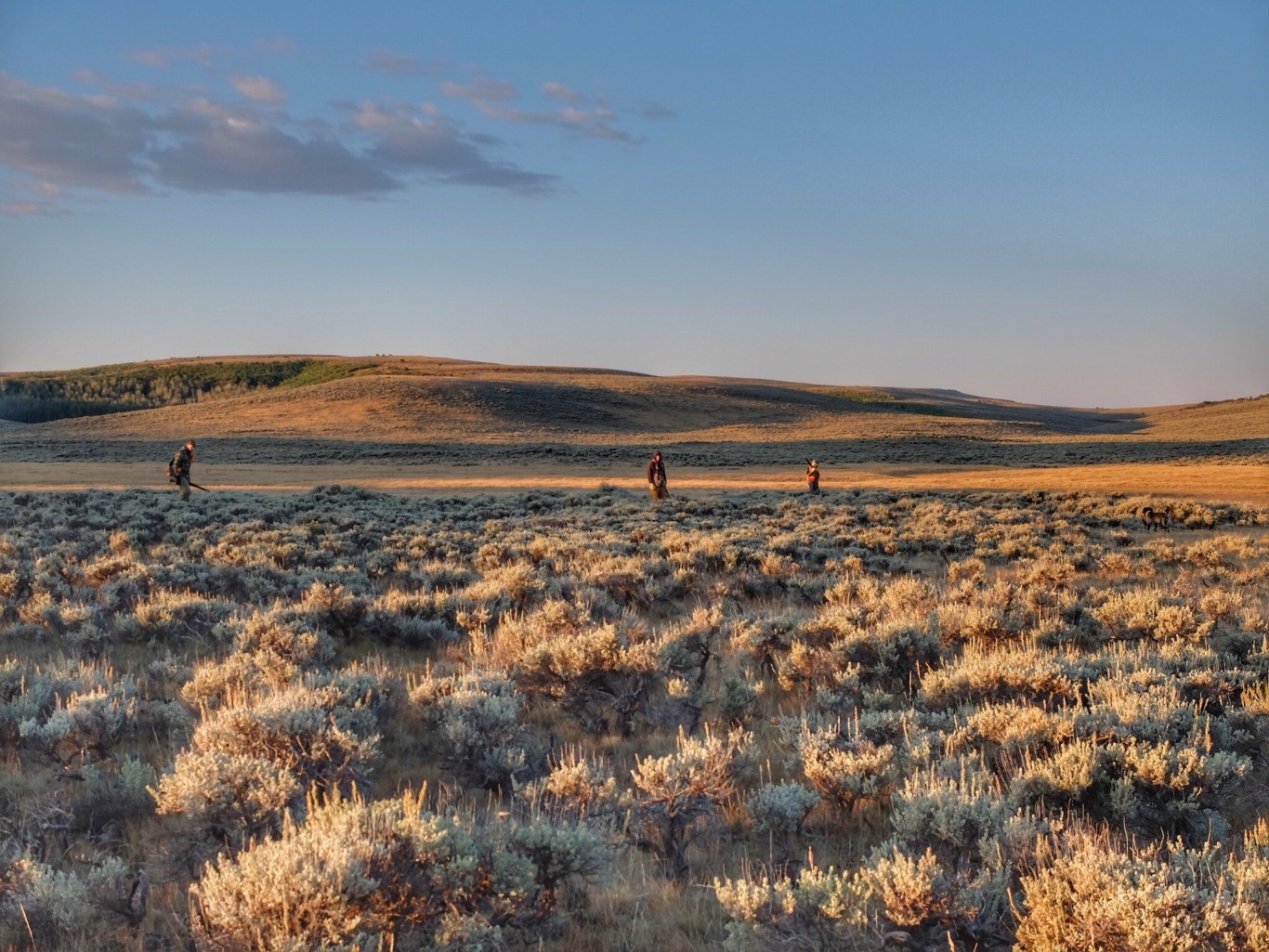 What Sage Grouse Taught Me
