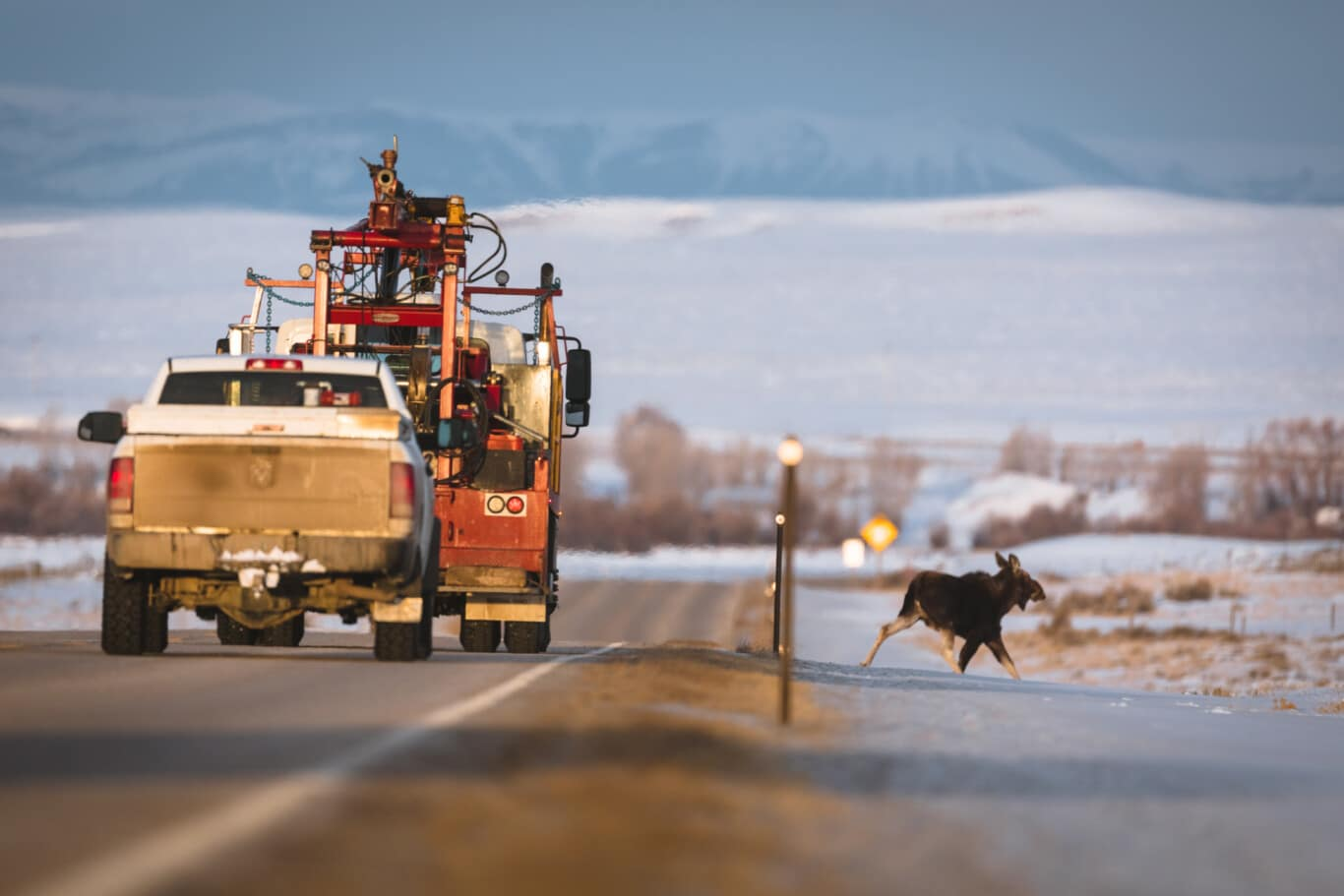 Wyoming Wildlife and Roadways Initiative