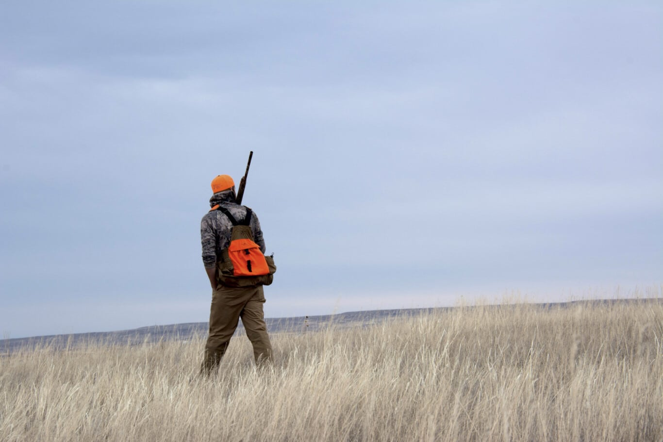 Sam Stein Bird Hunting