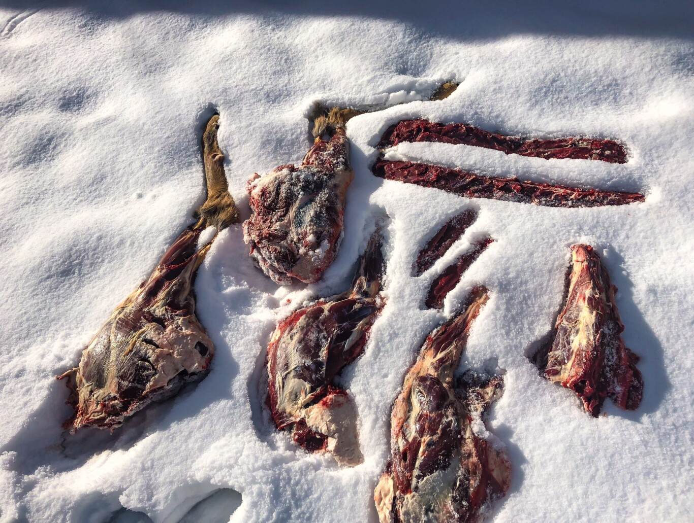 Whitetail Meat QUartered Out