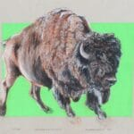 Bull Speed Ahead, conte dry pastel by Jenny Reeves-Johnson