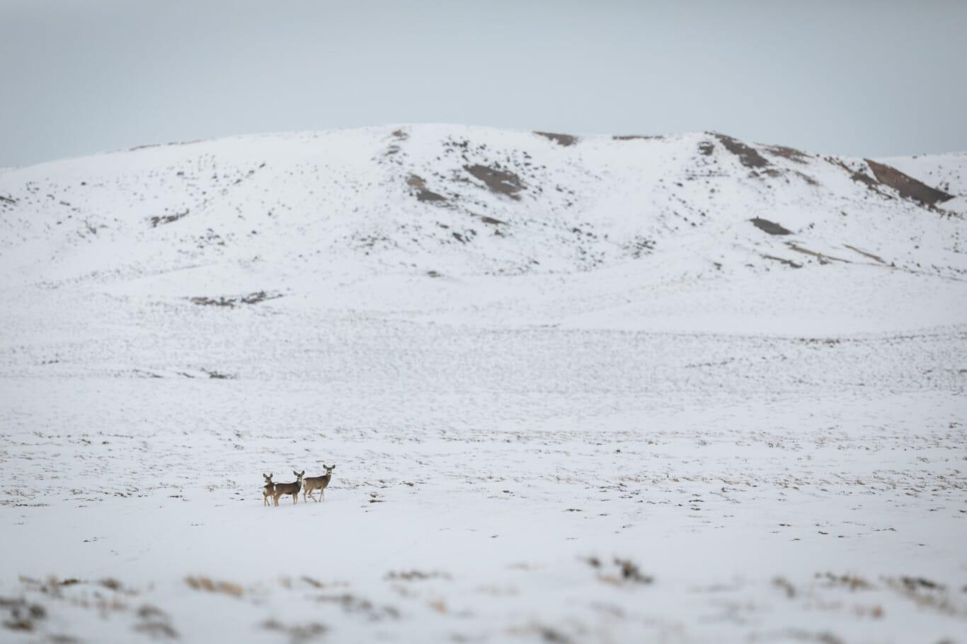 122120_David_Frame_Deer_Migration