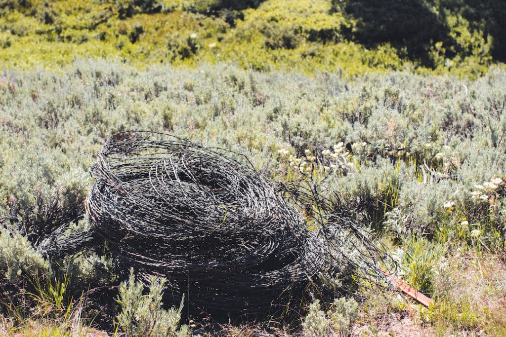 WWF_Pile_Of_Barbed_Wire