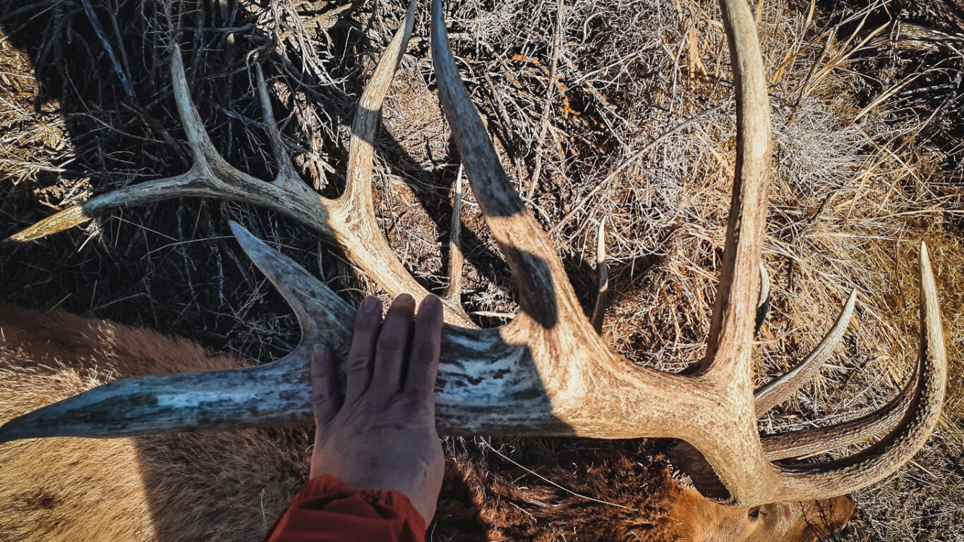 Perseverance On the Hunt of a Lifetime