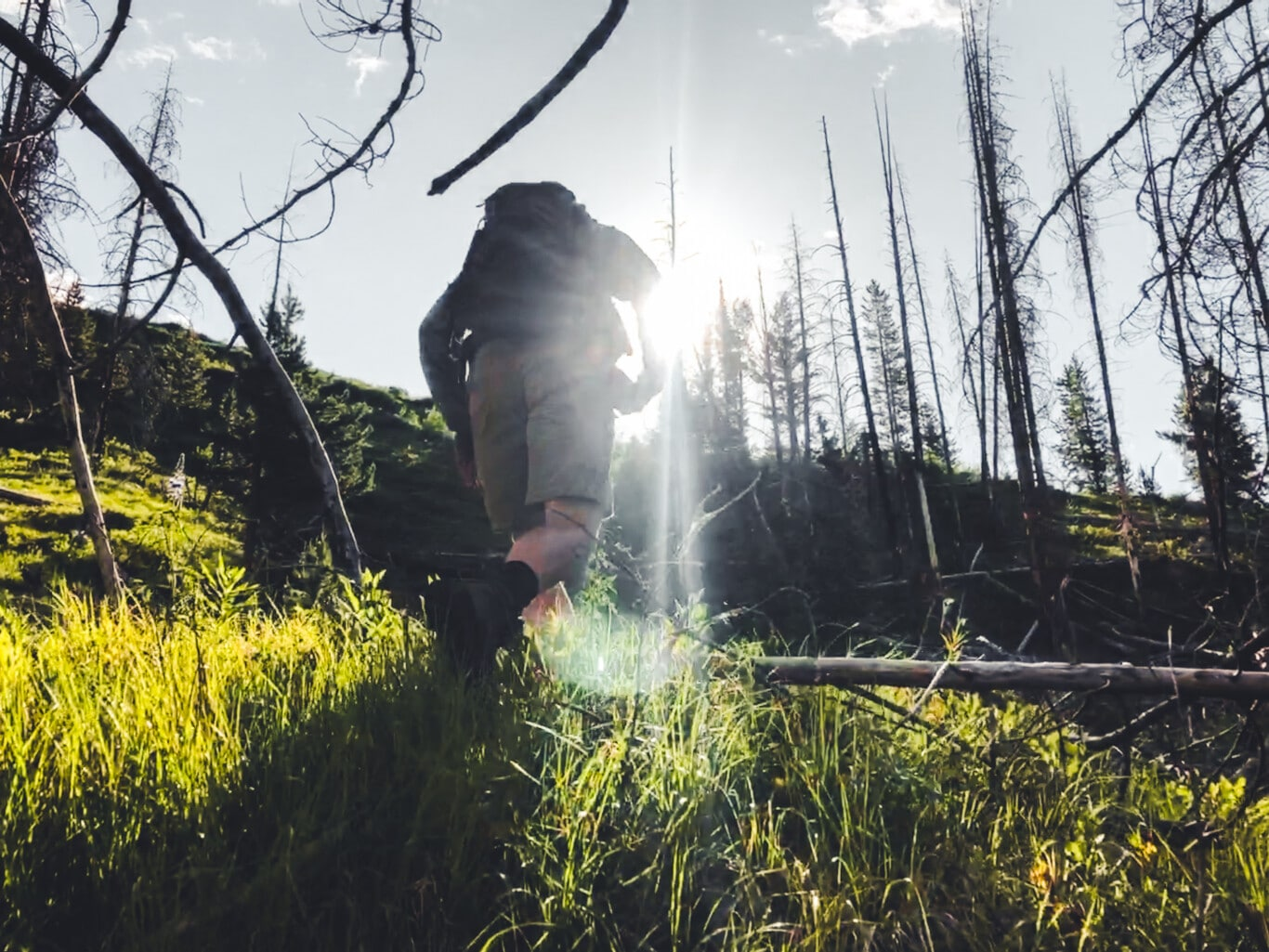 Why We Care About the Bridger-Teton National Forest