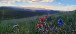 Wildflowers at Wild Iris