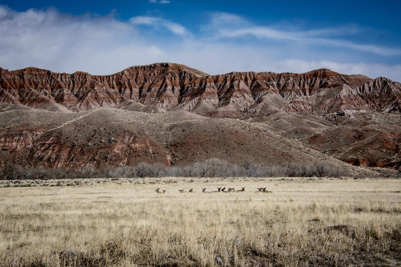 East Fork Mule Deer