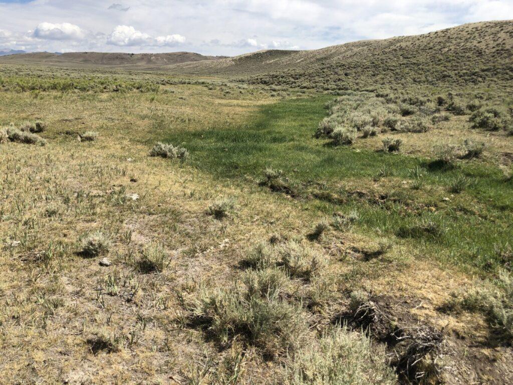 Sage Brush Meadow