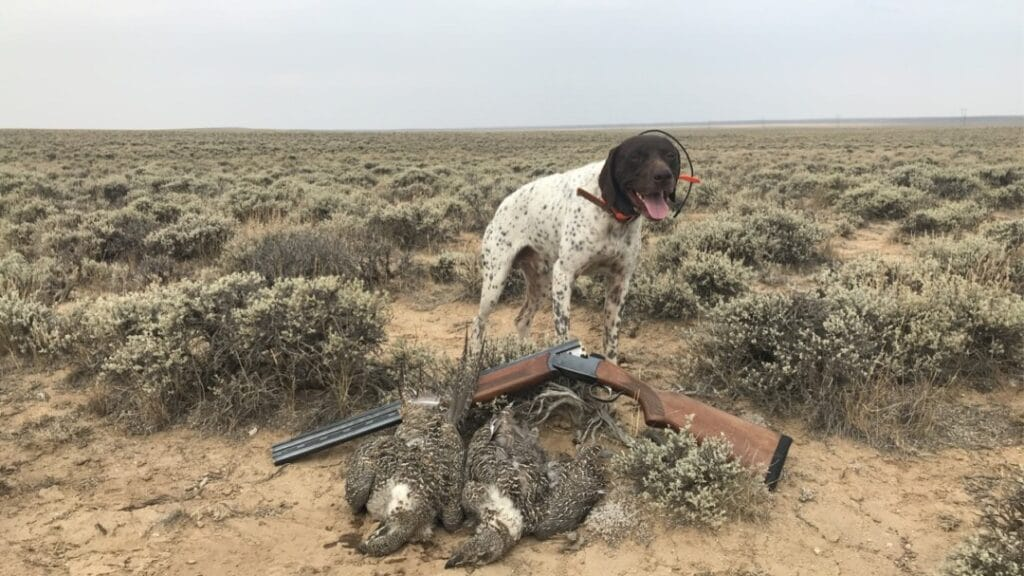 Sage Grouse Hunting the Red Desert