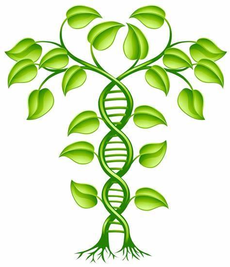 Members Only: Journal Club #5: Cannabis Strain Genetics