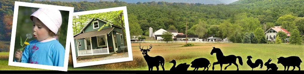 Mountain Dale Farm