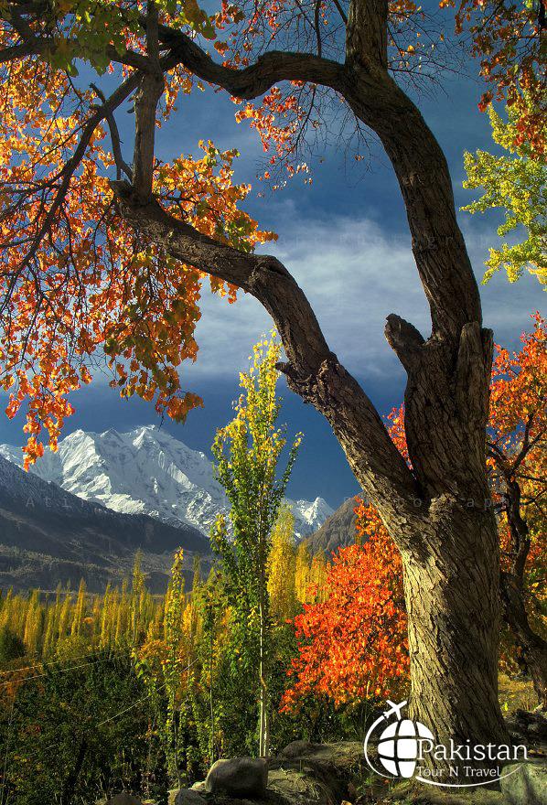Grand View of Rakaposhi Peak from Ganish Valley, Hunza