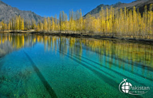 Breathtaking Tree of Skardu Valley, in shadow of Katpana LAKE