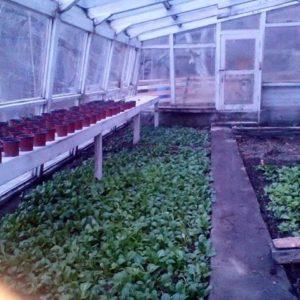 Organic Farming in Hunza Embassy Hotel in karimabad