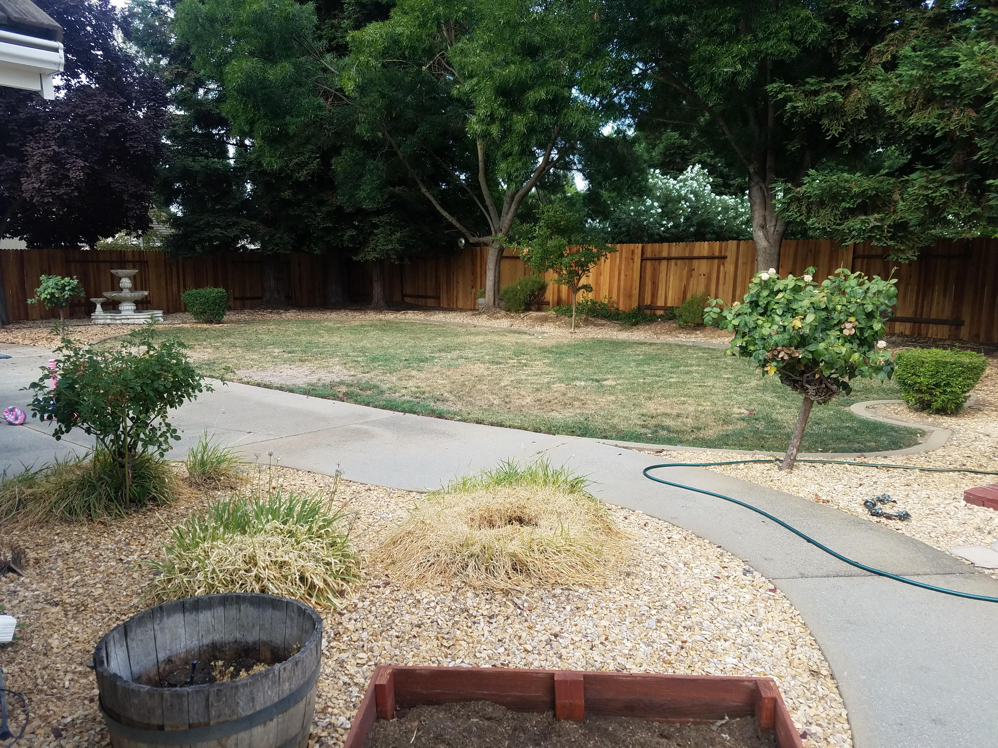 Backyard View 4 - Original Yard