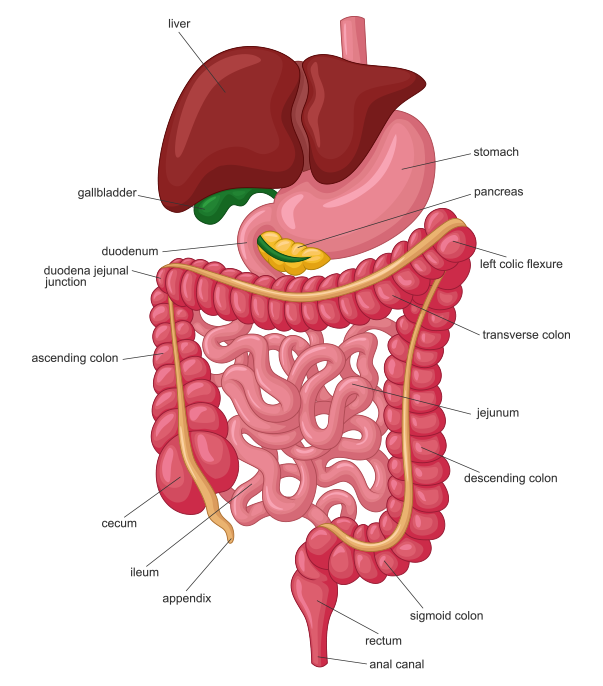 gastroenterologists orange ca