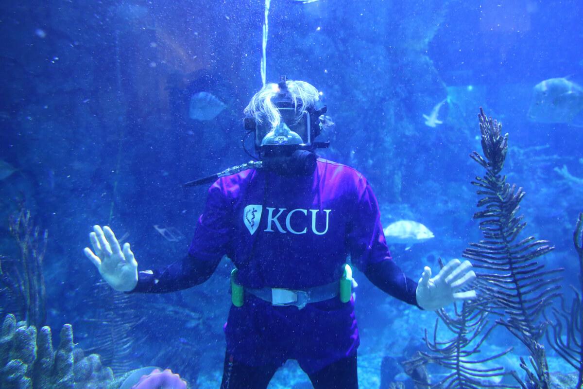 Shedd Aquarium Fish Dive