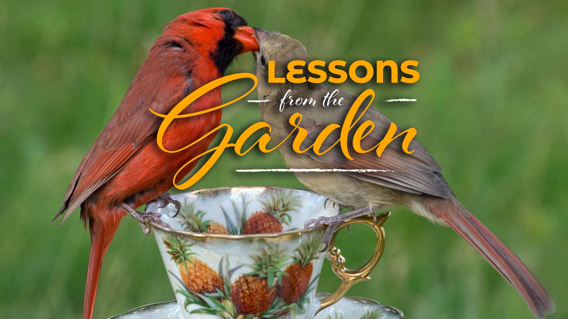 Wonders in the Garden